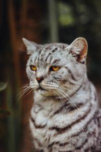 Kucing Anda Curi-Curi Marah Anda  Kenapa? – Dunia Haiwan